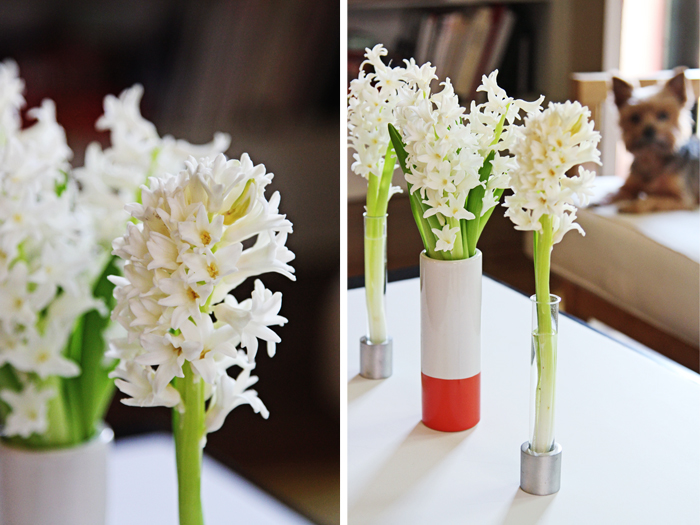 Brewed-Together-Hyacinth-Tube-Bouquets-10