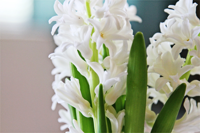 Brewed-Together-Hyacinth-Tube-Bouquets-7