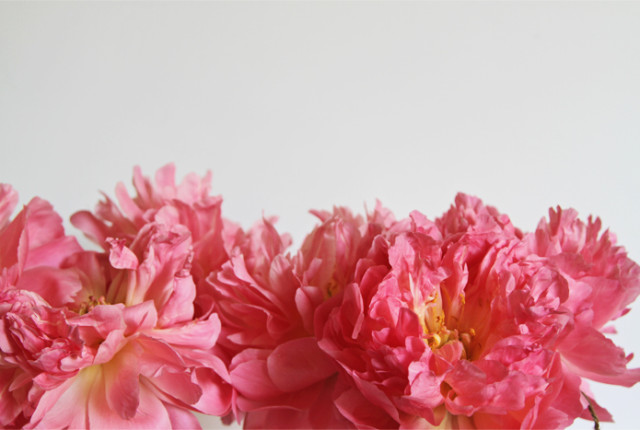 Brewed-Together-Peony-Heaven-11
