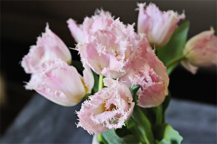 Brewed-Together-Pink-Tulips-6
