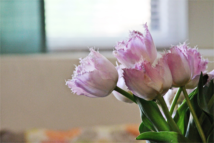 Brewed-Together-Pink-Tulips-9